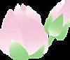Hasu01